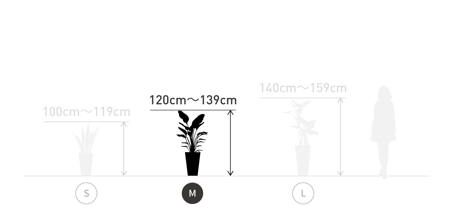 サイズ目安 M 120〜139cm