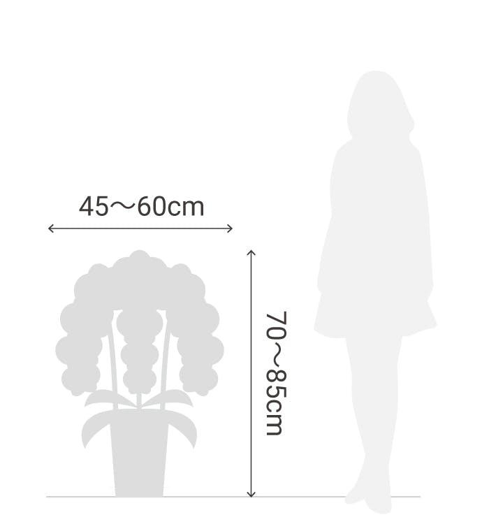 サイズ目安 縦70〜85cm 横45〜60cm