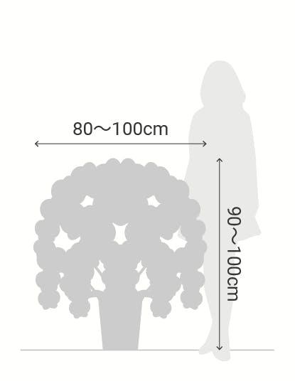 サイズ目安 縦90〜100cm 横80〜100cm